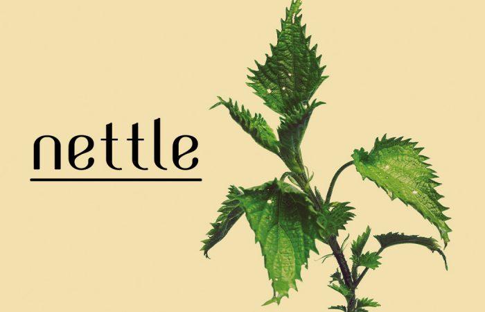 Nettle Duvalli